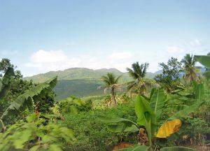 Urwald-bei-Samana-Nationalpark-Los-Haitises
